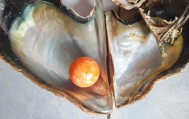 Pescador encontra pérola laranja raríssima de R$ 1,85 milhão
