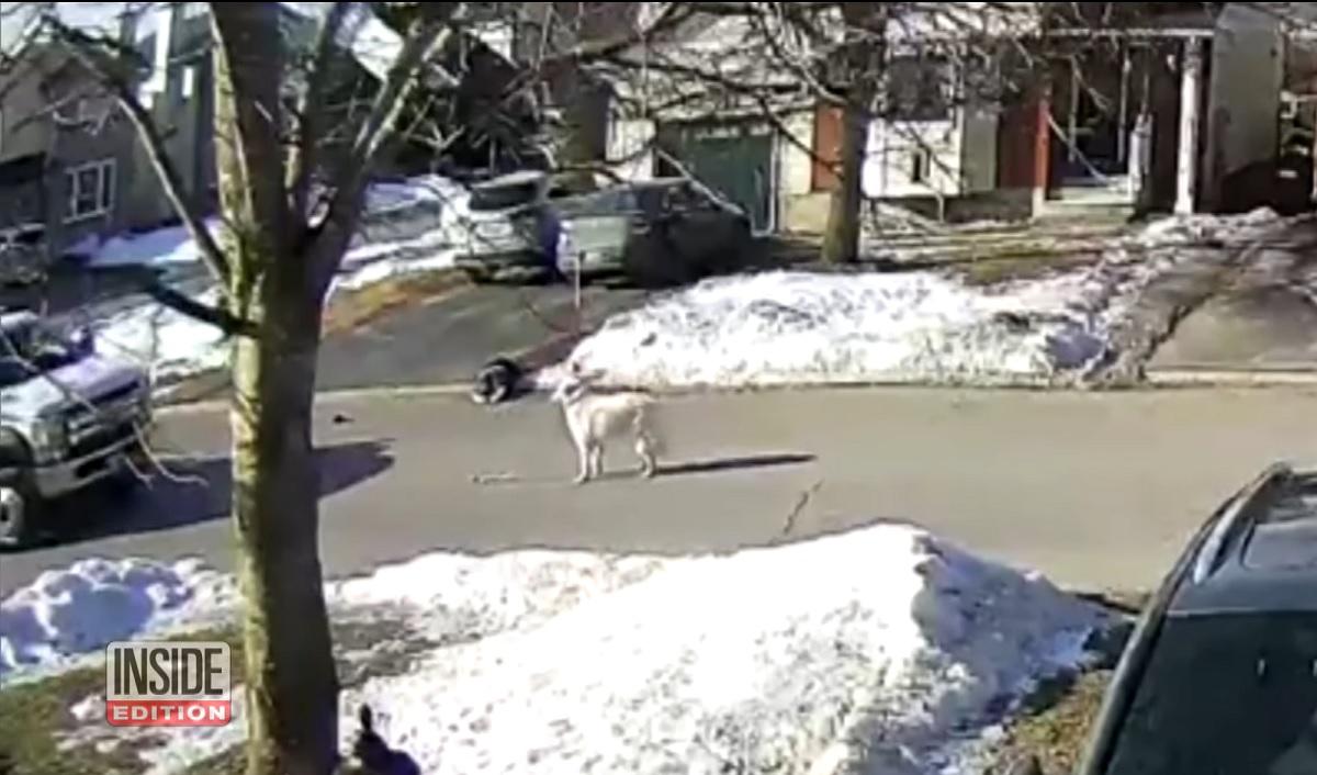 Cão salva tutora que desmaiou em plena rua no Canadá