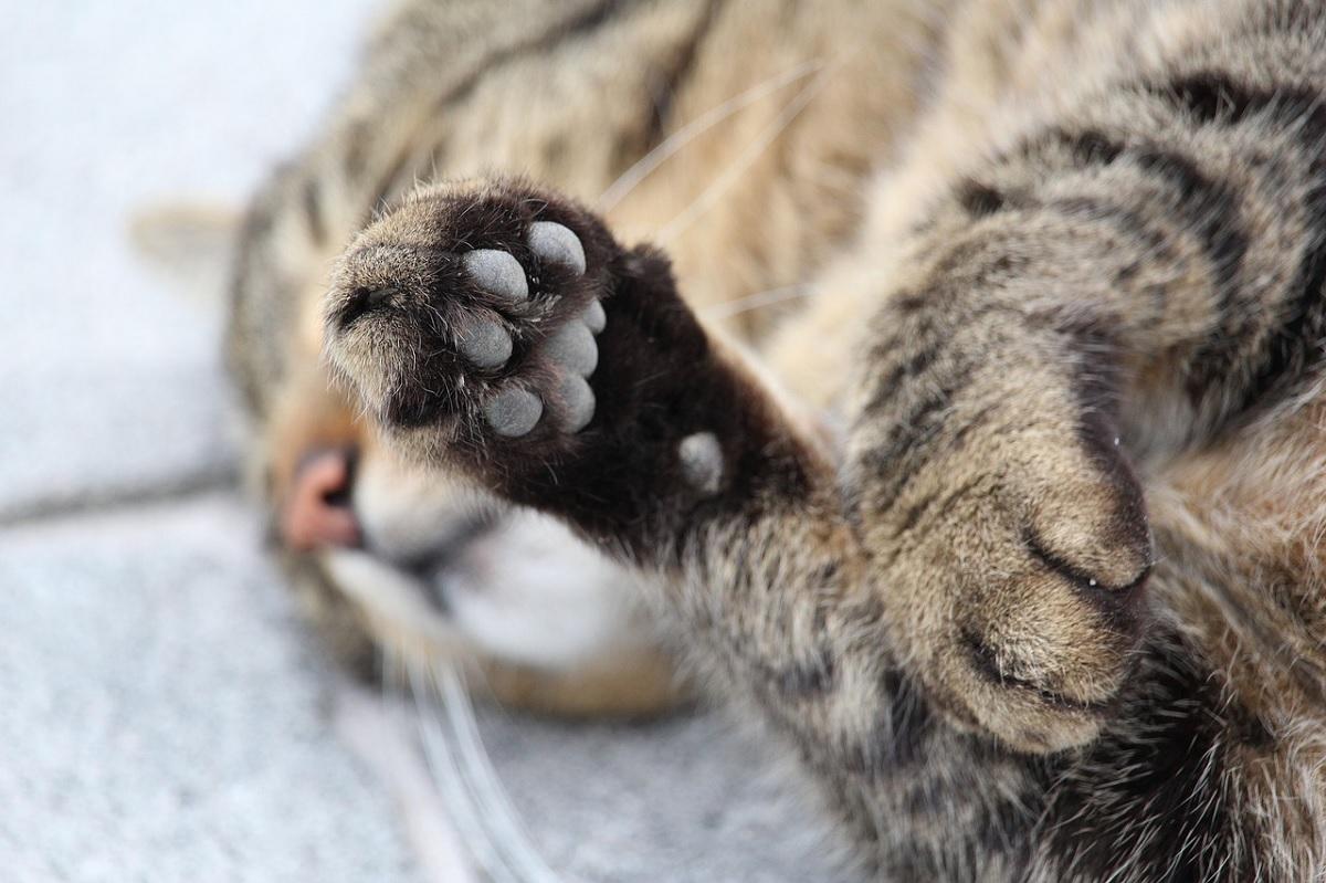 Estudo associa doença da arranhadura do gato à esquizofrenia