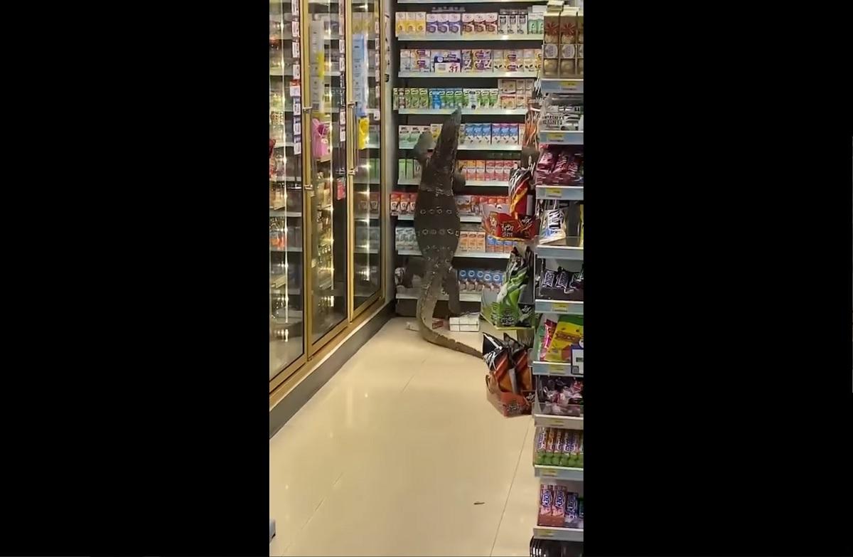 Lagarto gigante invade loja da 7-Eleven na Tailândia