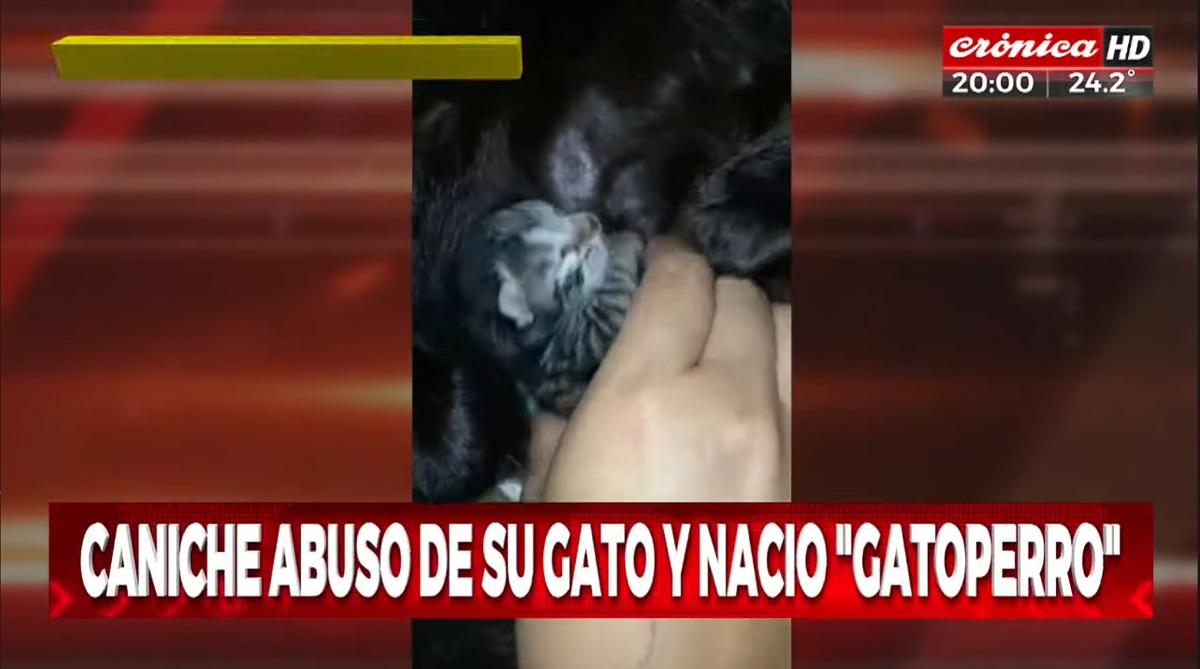 Suposto filhote de gato e cachorro nasce na Argentina