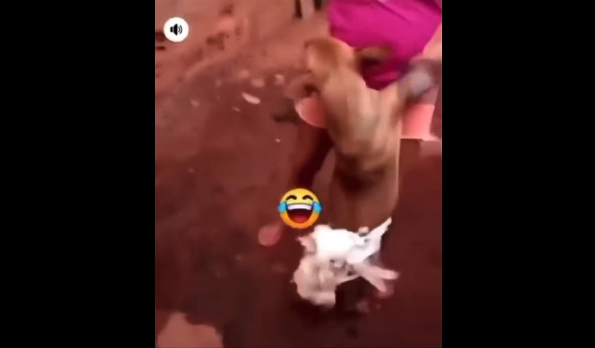 Revoltante: casal prende galinha em cachorro e solta bomba neles