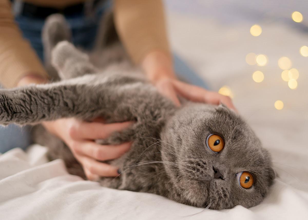 Os gatos não são indiferentes aos donos como se imagina