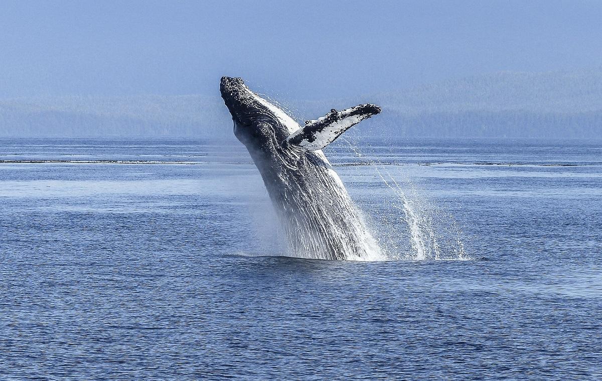 Baleia atinge barco e deixa jovem em coma na Austrália