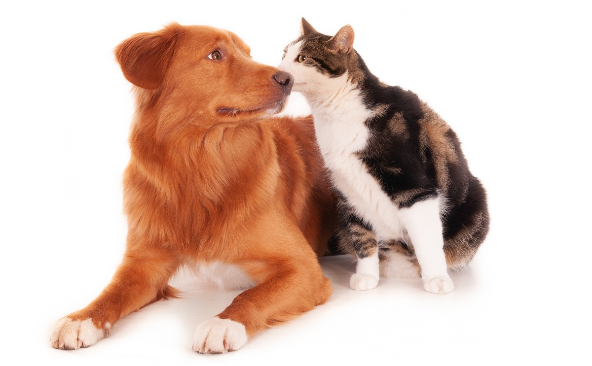 Muitos pets estão pegando covid-19 de seus donos, segundo estudo