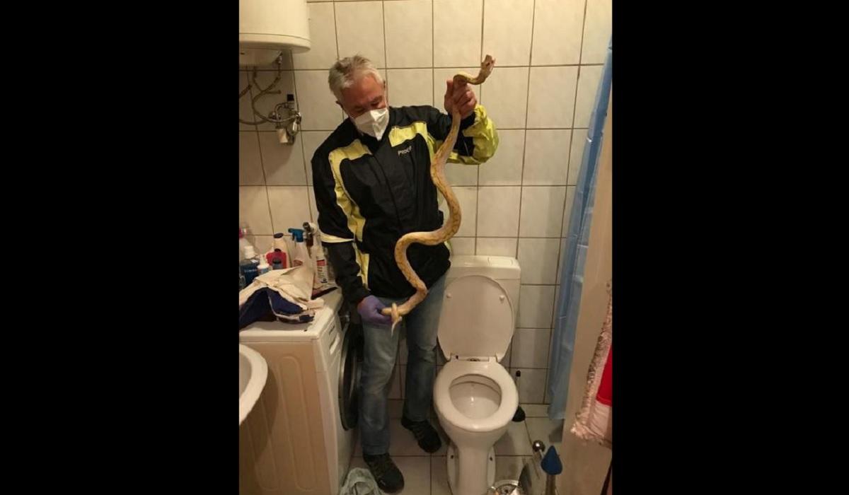 Homem leva mordida de cobra no pênis ao sentar na privada