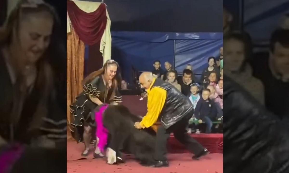 Vídeo: urso ataca treinadora em circo itinerante da Rússia