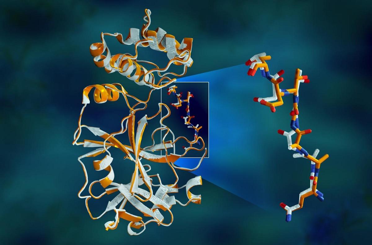 Cientistas usam IA para prever a estrutura de 98,5% das proteínas humanas