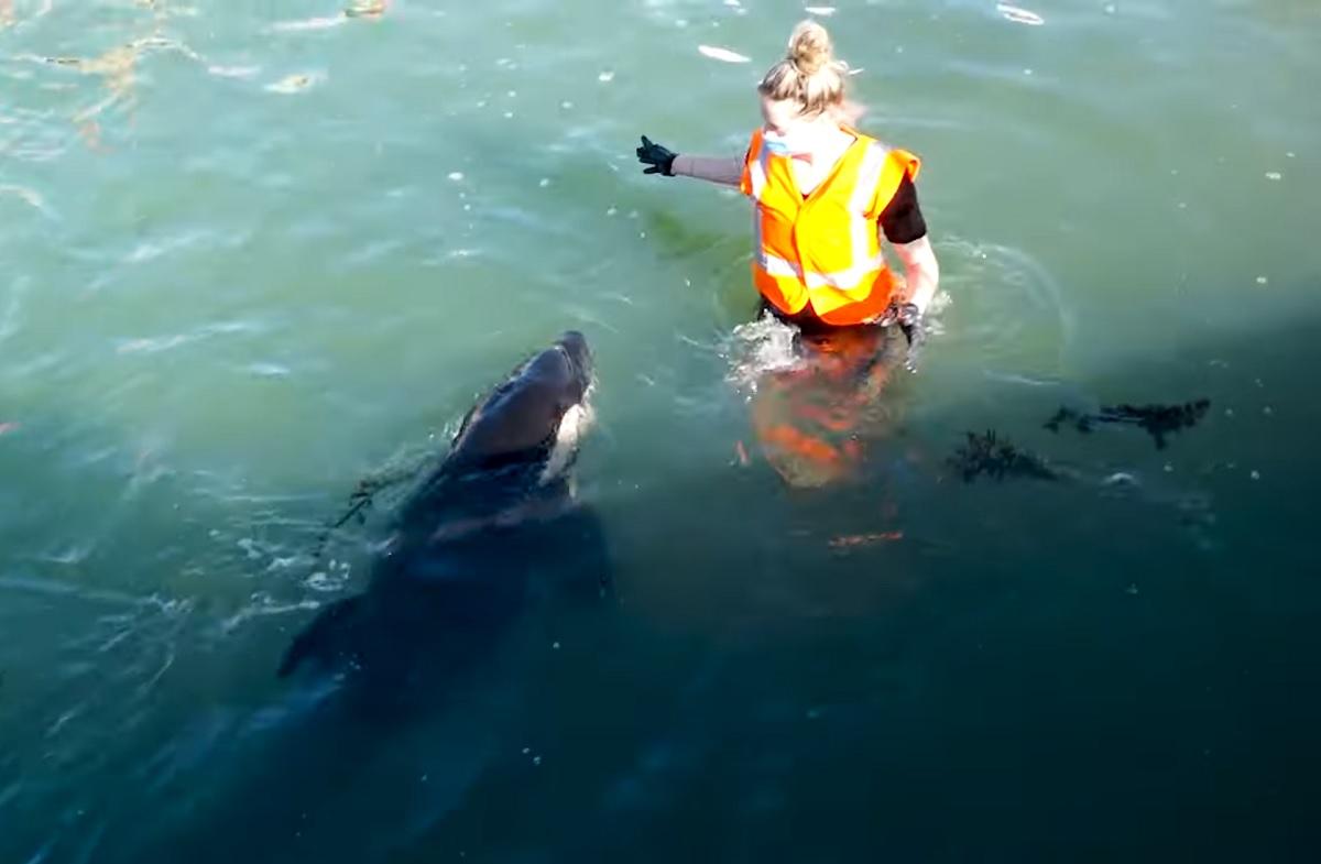 Bebê orca que estava 12 dias longe da mãe não resiste e morre