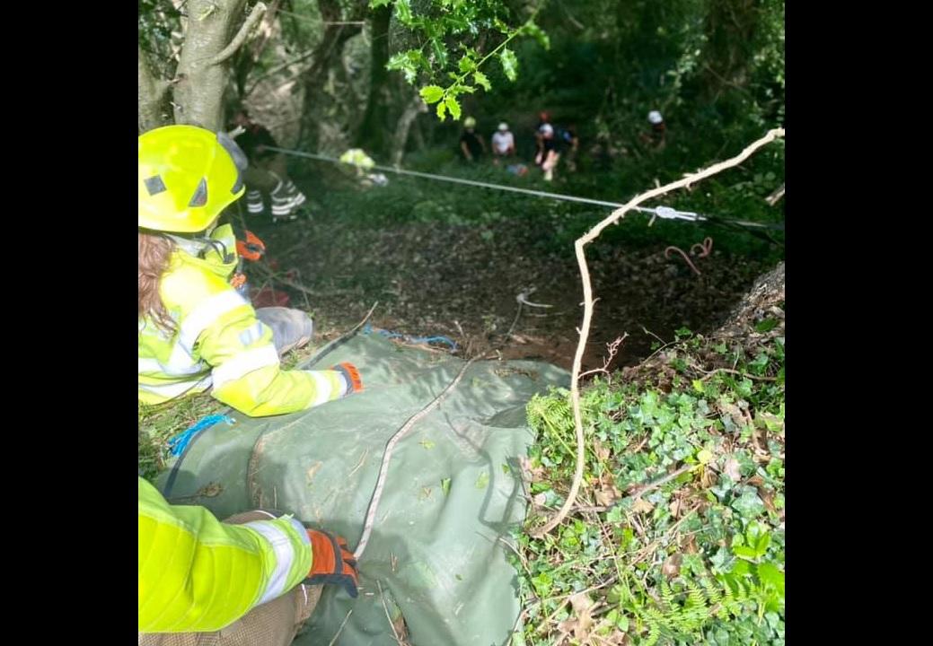 Gata ajuda a salvar idosa que caiu num barranco no Reino Unido