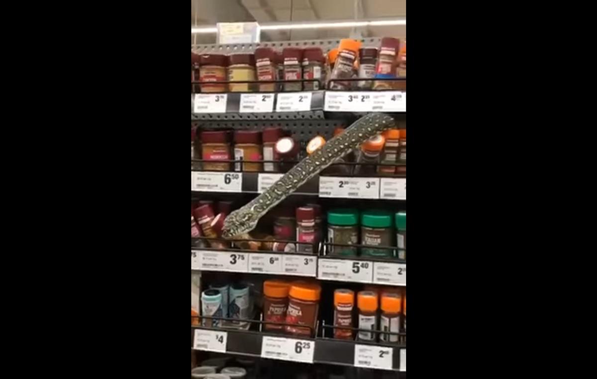 VÍDEO: cobra surge na prateleira de supermercado na Austrália