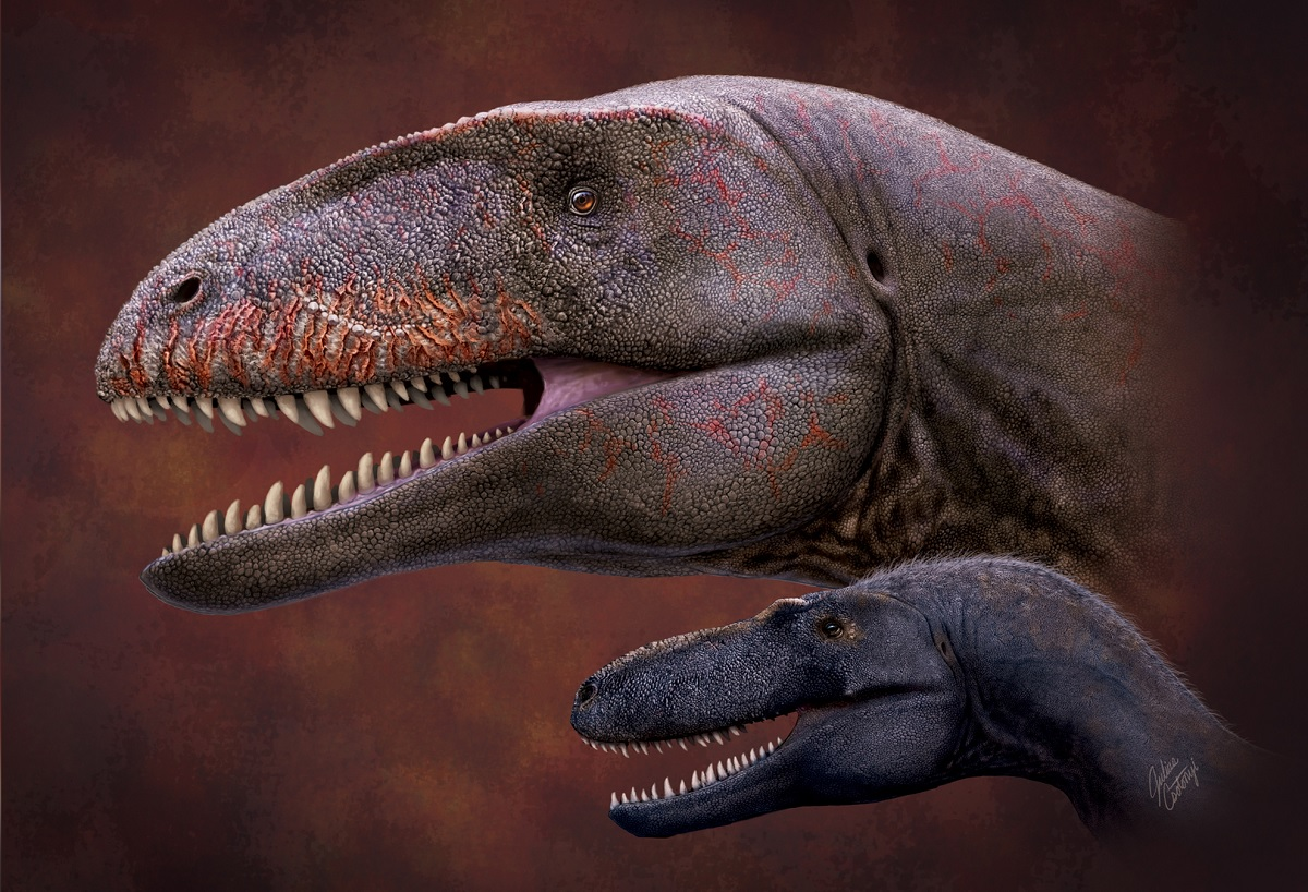 Descoberto novo dinossauro com dente de tubarão no Uzbequistão
