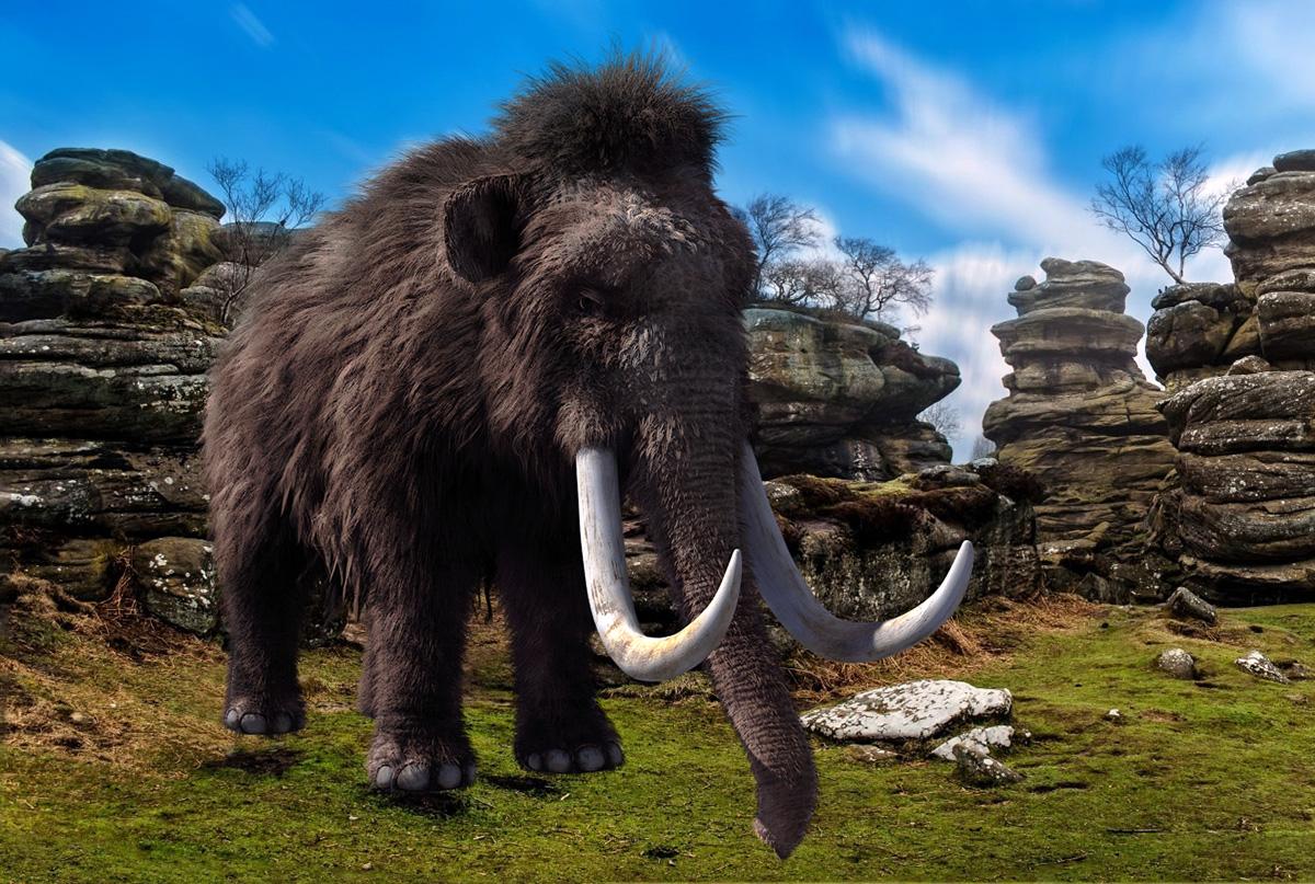 Empresa americana pretende ressuscitar o mamute-lanoso, extinto há 10.000 anos