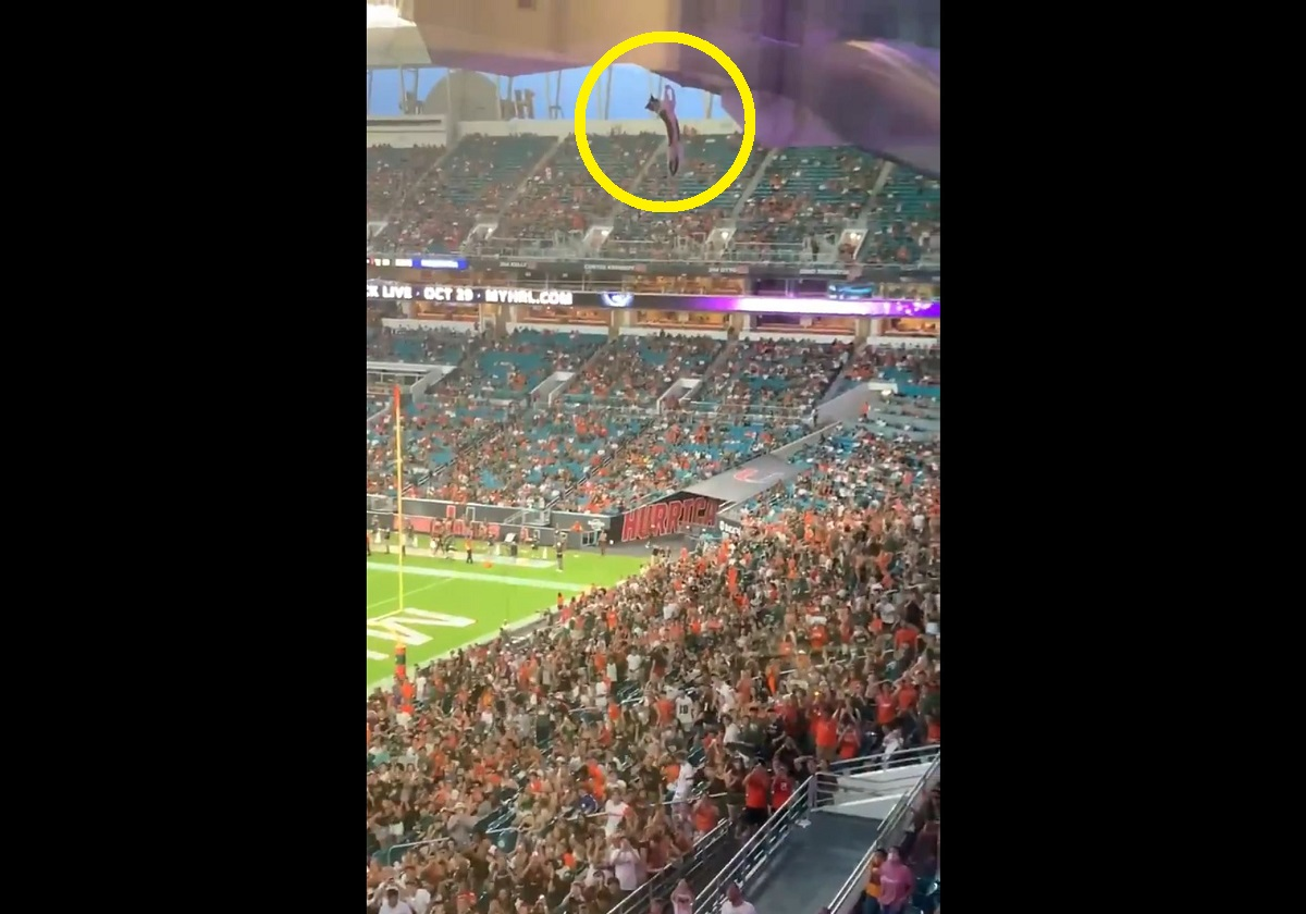 VÍDEO: gato é salvo por torcedores em estádio nos Estados Unidos