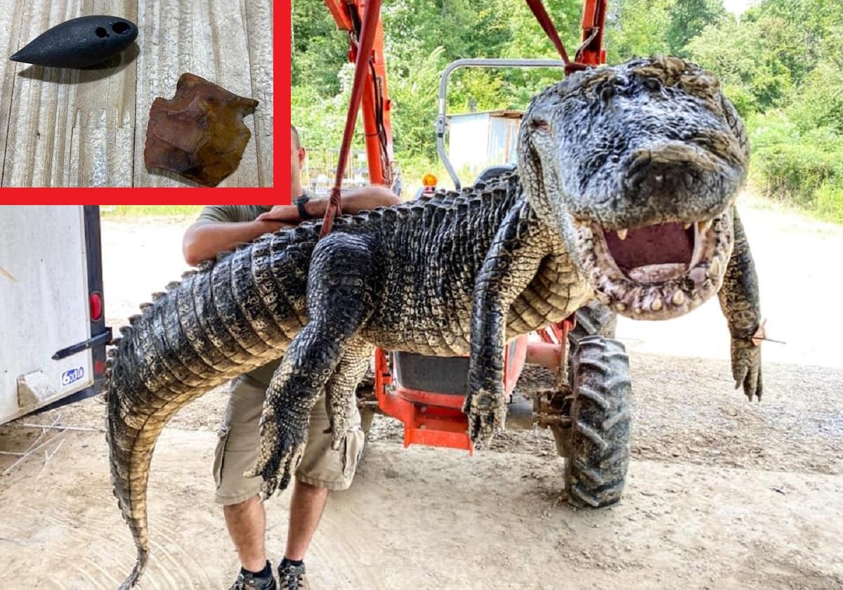 EUA: crocodilo de 5 metros tinha dois objetos históricos em sua barriga