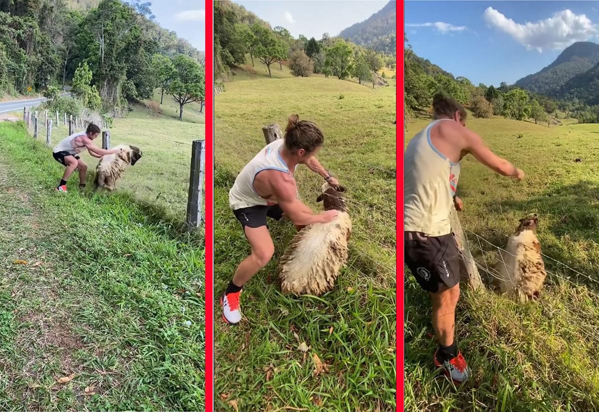 VÍDEO: Nick Cummins, ex-atleta do rugby, salva ovelha presa em cerca
